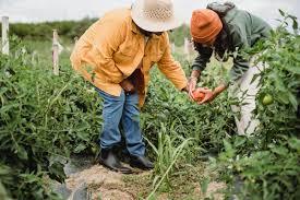 Кальциевая вода из яичной скорлупы способ приготовления