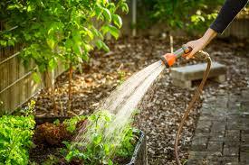 Где растет эбеновое дерево