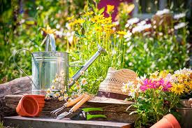 Комнатный цветок долларовое дерево как ухаживать