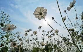 Как вырастить мочалку из семян