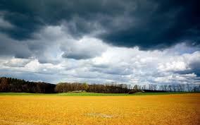 Орхидея мультифлора: описание и уход