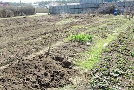 Как правильно сделать обрезку плодовых деревьев