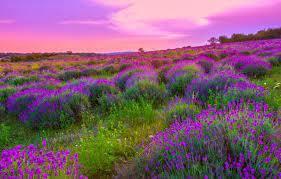 Дерево грецкий орех польза и вред