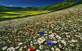 Размножение гейхеры: способы и полезные рекомендации