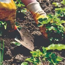 Где растет красное дерево