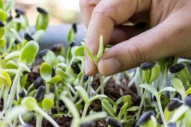 Что посадить вдоль забора из сетки рабицы