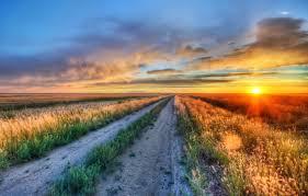 Зимовка роз в открытом грунте