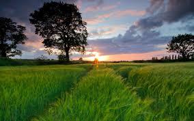 Можно ли вырастить чай в домашних условиях
