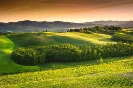Цветок глициния посадка и уход