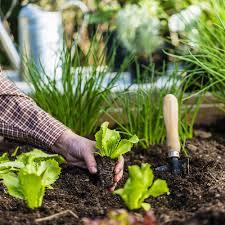 Подготовка черенков винограда к посадке весной