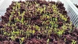 Теневыносливые комнатные растения для прихожей