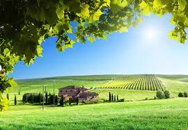 Кербовка плодовых деревьев