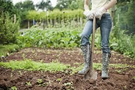 Торения: виды и особенности выращивания