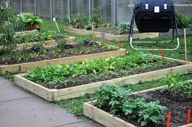 Хризантема «Антонов»: описание и рекомендации по выращиванию