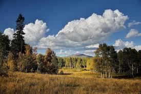 Как выращивать мальву из семян?