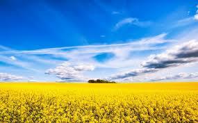 Священный цветок буддизма