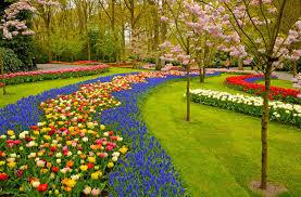 Белые пятна на листьях орхидеи что делать