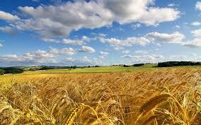 Самодельный водяной насос для дачи