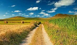 Простой забор на даче своими руками