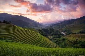 Какие садовые цветы цветут все лето