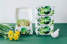 Особенности выращивания алиссума