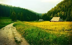 Как подготовить черенки винограда к посадке весной