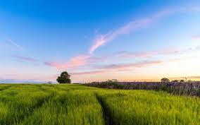 Фиалка «ЛЕ-Тристан»: описание и выращивание