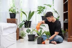 Чем обрабатывают яблоки для длительного хранения