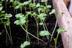 Какие деревья сажают осенью на даче