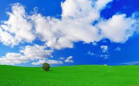 Как выращивать фиалки сорта «РС-Виконт»?