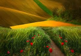 Что делать чтоб цветы дольше стояли