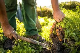 Что значит замульчировать почву